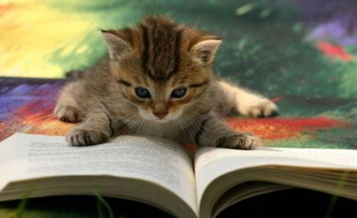 optimized-cat-reading-book