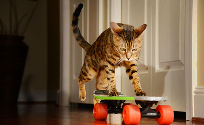 Photo Credit: skateboardpets.com
