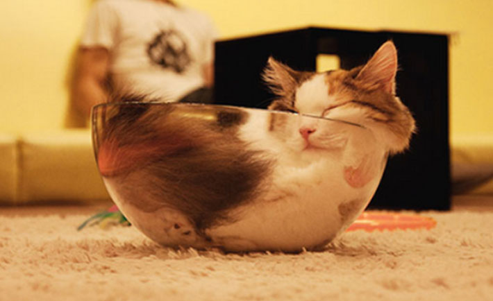 optimized-cat-sleeping-bowl