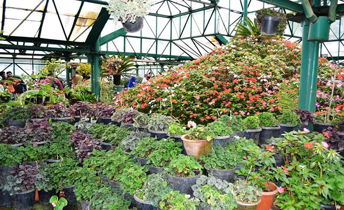 optimized-ooty-queen-of-hill-station-conservatory