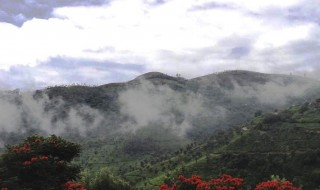 optimized-ooty-queen-of-hill-station-foggy-hills