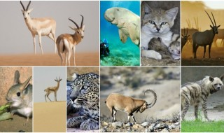 Animals Collage DR article pic