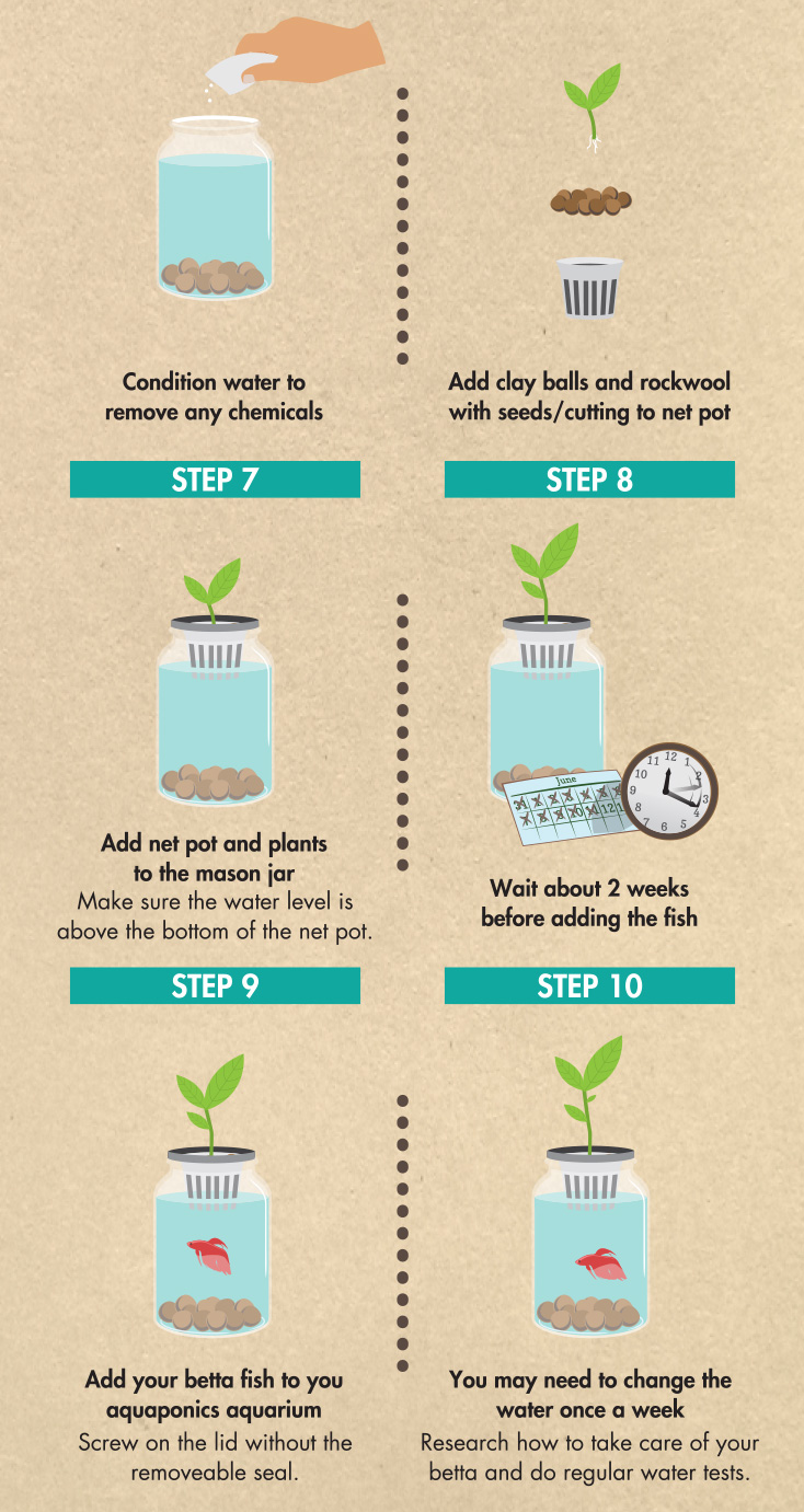 2Mason_Jar_Aquaponics_DIY