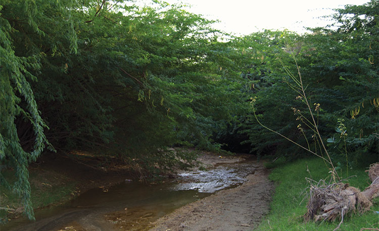 A-stream-running-into-a-thick-forest