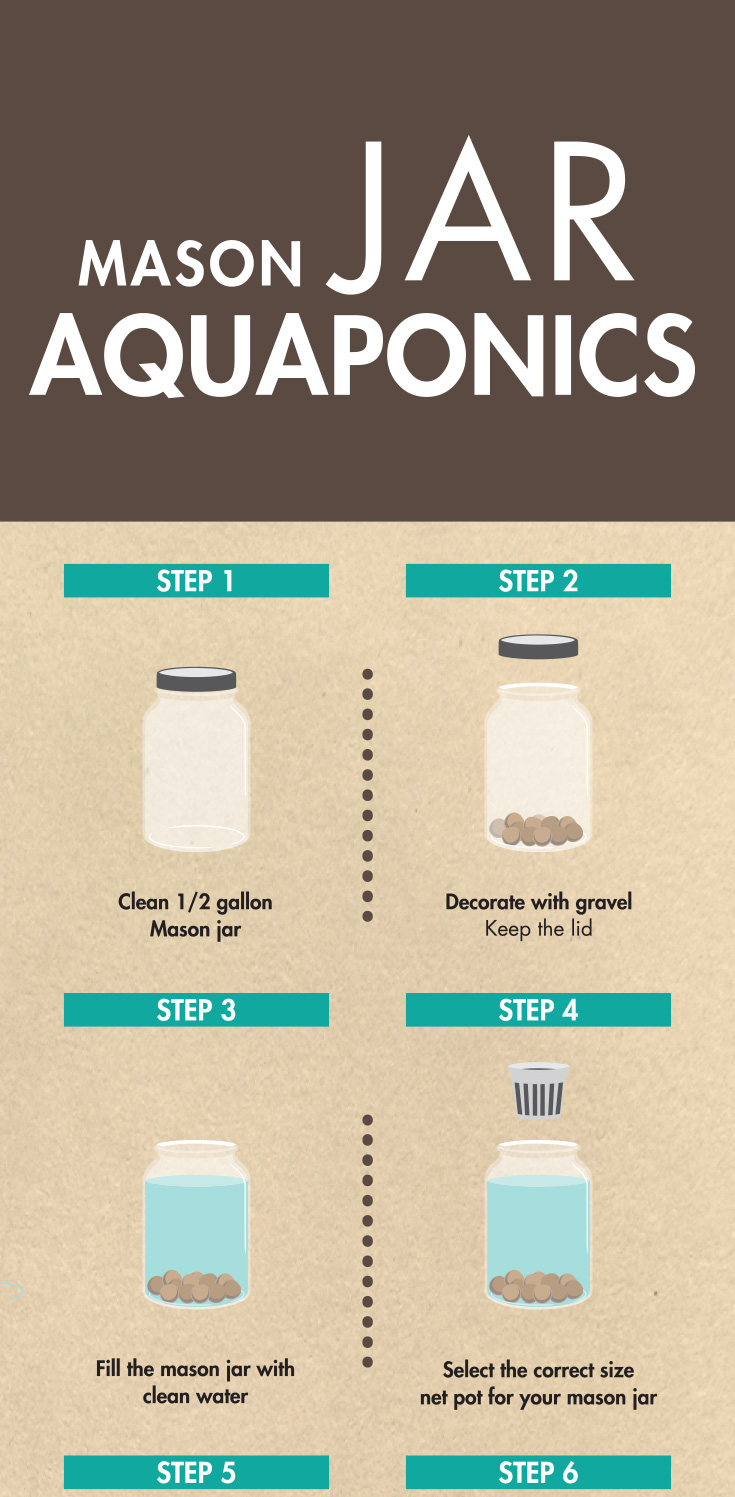 Mason_Jar_Aquaponics_DIY