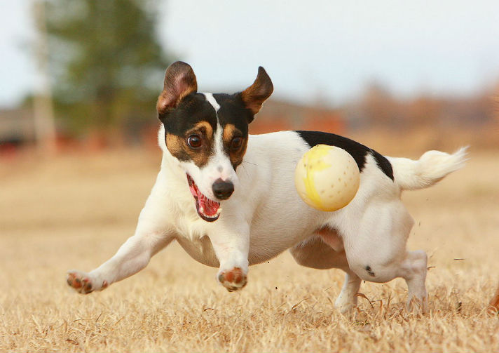 1024px-JRT_with_Ball