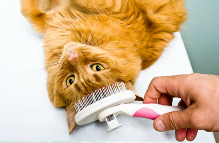 cat-care_cat-grooming_body1-right www