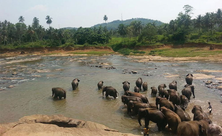 The elephant village called Pinnawala.