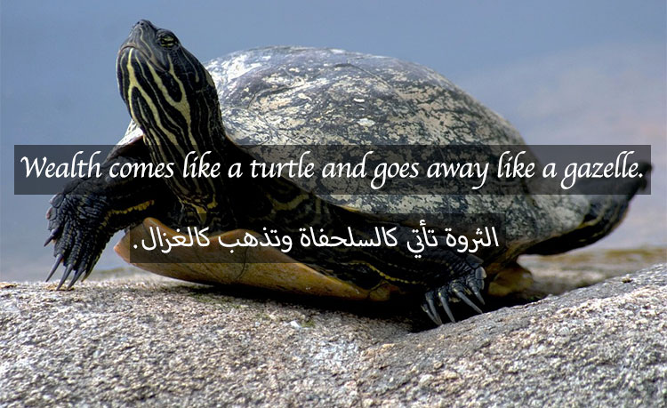 water-turtle-649667_960_720