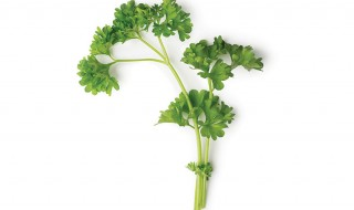 Parsley-Website