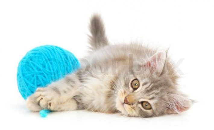 4670958-cat-with-ball-of-yarn