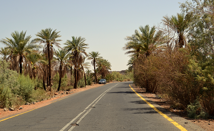 road-passing-through-palm-trees