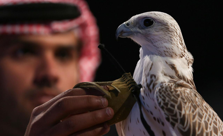 saudi-falcons-and-hunting-exhibition-2019-copy